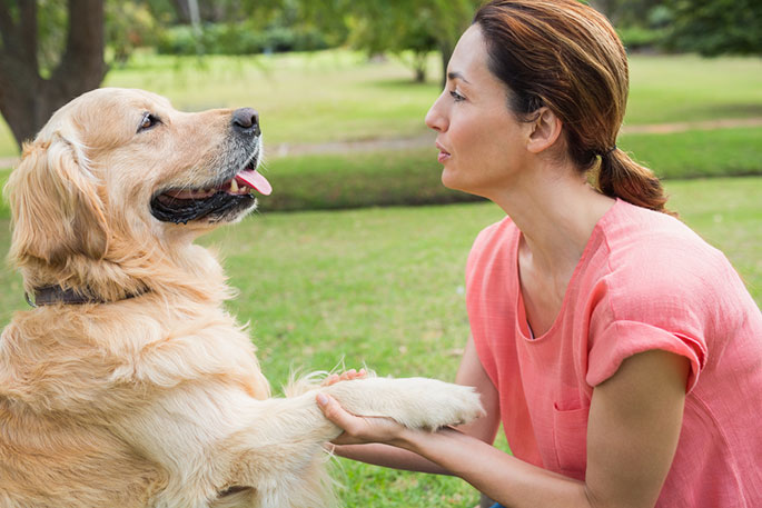 training tips for new dog owner