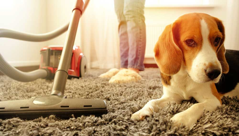 Best Carpet Cleaner for Pet Stains
