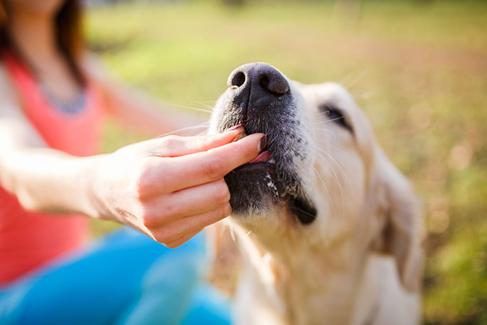 Want To Keep Your Dog Happy And Healthy