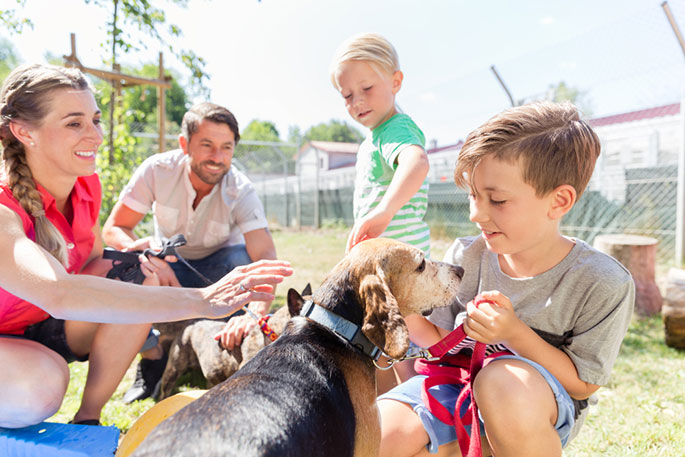 Preparing for Pet Adoption: A Four-Step Guide