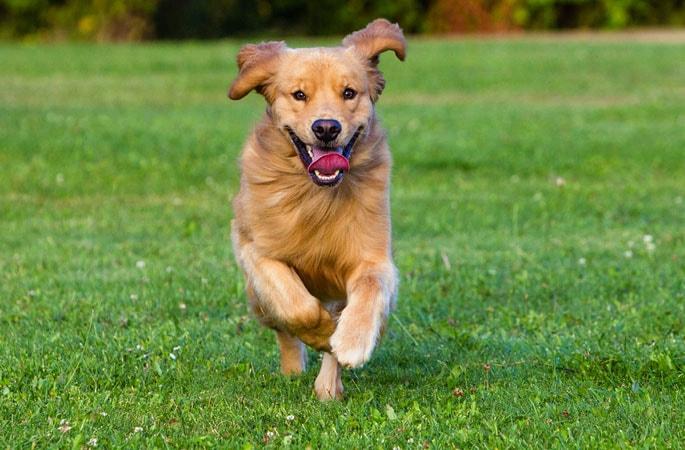 ways to make your dog healthier
