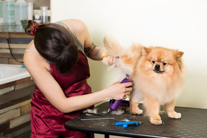 Best Dog Grooming Clippers Buying Guide