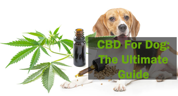 CBD For Dog: The Ultimate Guide