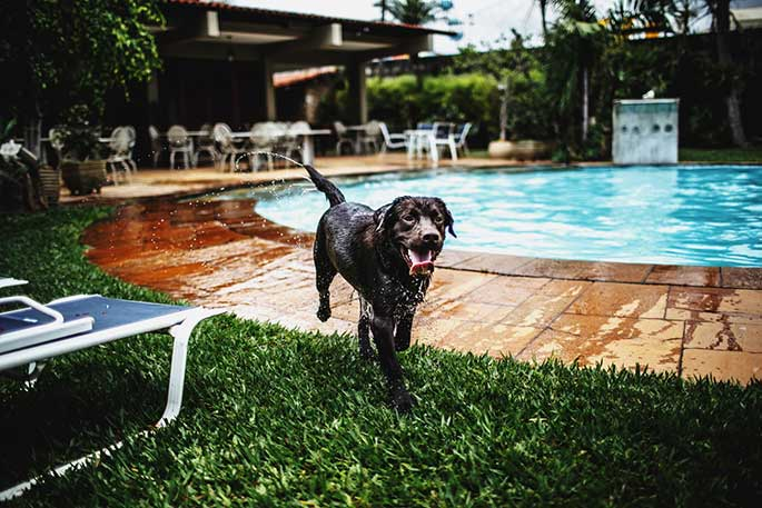 Dog-Pool-As-A-Way-To-Rejuvenate-And-Maintain-Physical-Condition