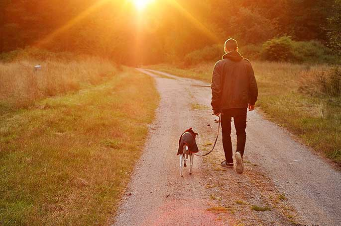 Is Training A Dog's Brain Possible?