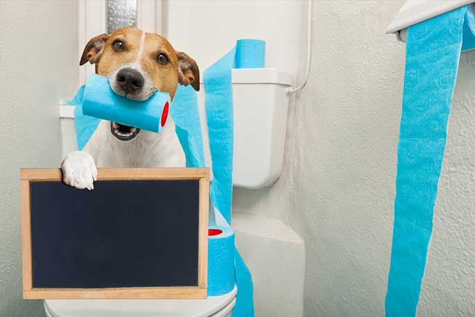 What To Give A Dog For Diarrhea