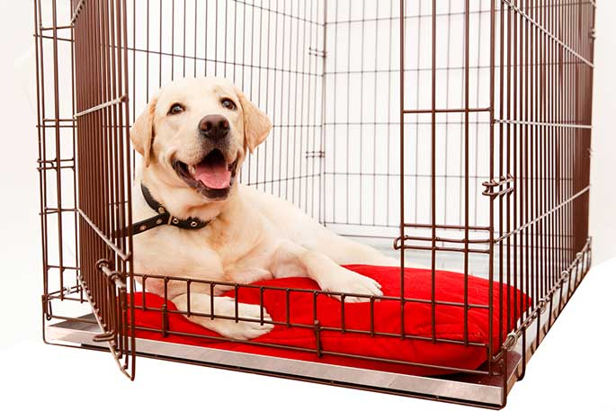 An Expert Guide to Buying Your First Dog Crate