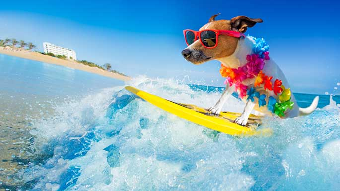 How to Look after Your Pooch This Summer