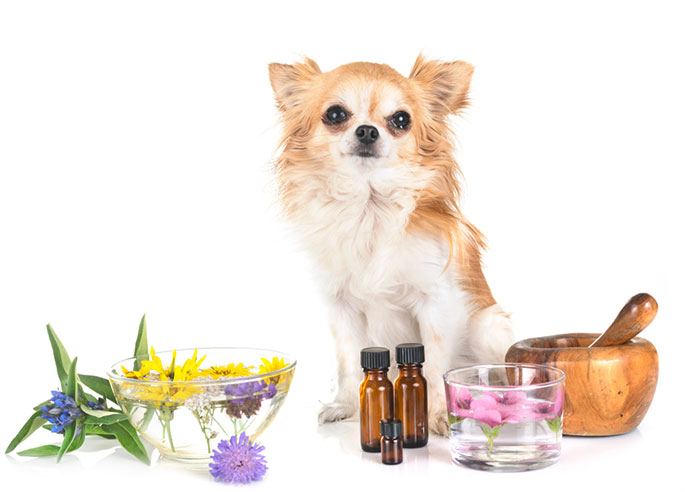 Essential Oils and Your Pets