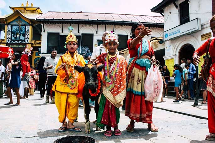 Cow is a sacred animal in India and Nepal