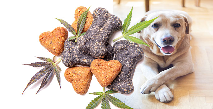 How Can CBD Oil Help Your Dog