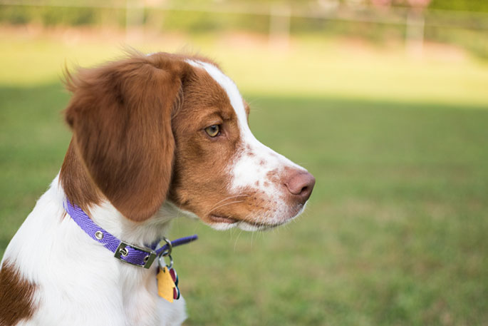 Things to Know Before Purchasing Dog Collars