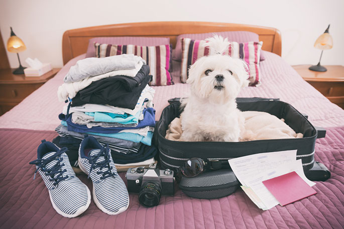 Travelling with Your Pet Via Car, Plane and Train
