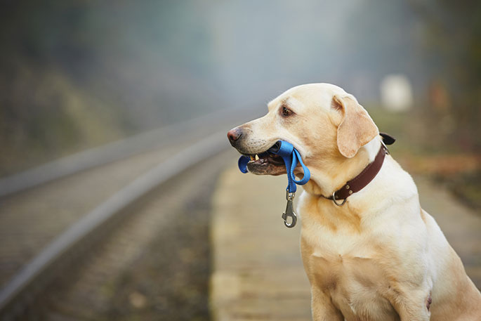 How to Track Down a Lost Dog