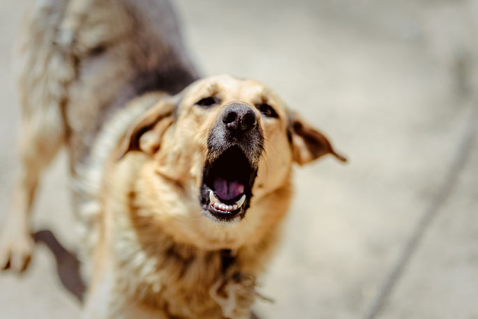products to stop dog barking
