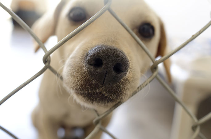 Bringing a Shelter Dog Home