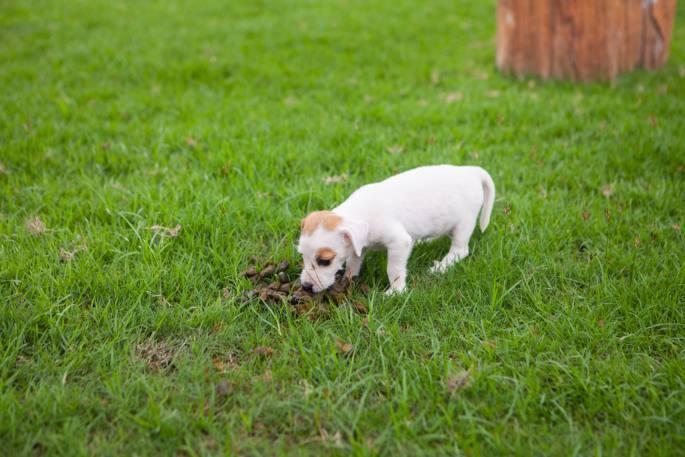 Ways to Stop Your Dog from Eating Poop