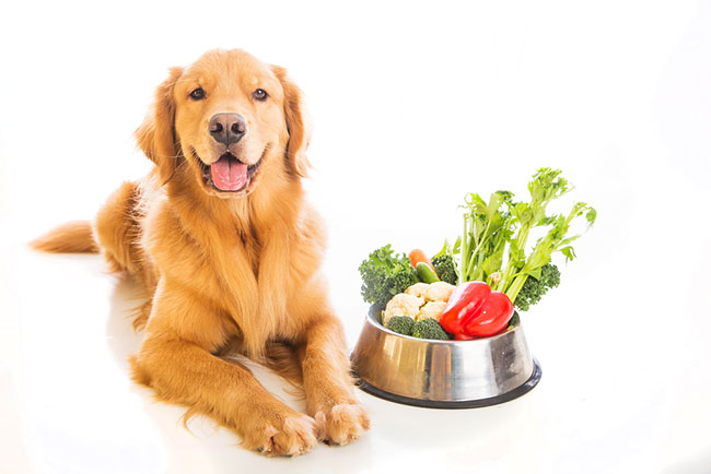 dog-nutrition-is-the-key-to-stop-eating-poop
