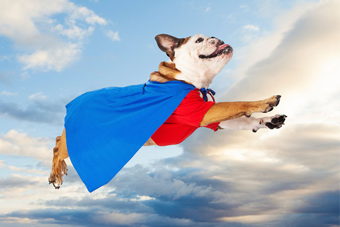 3 Ways That Dogs Are Superheroes in Disguise