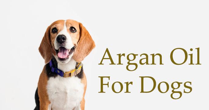 Argan Oil Good for Dogs