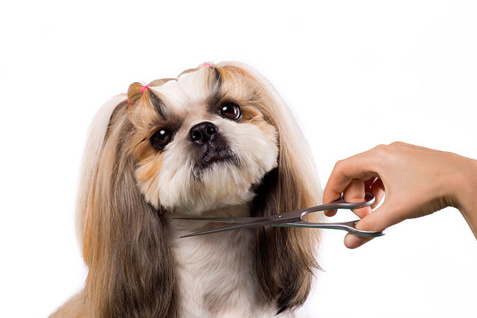 Make Your Dog Look More Appealing – Best Tips For Grooming