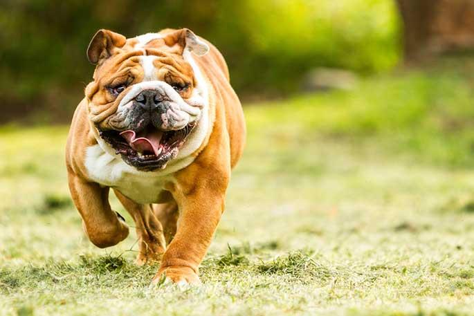 Most Friendly Dog Breeds for Children