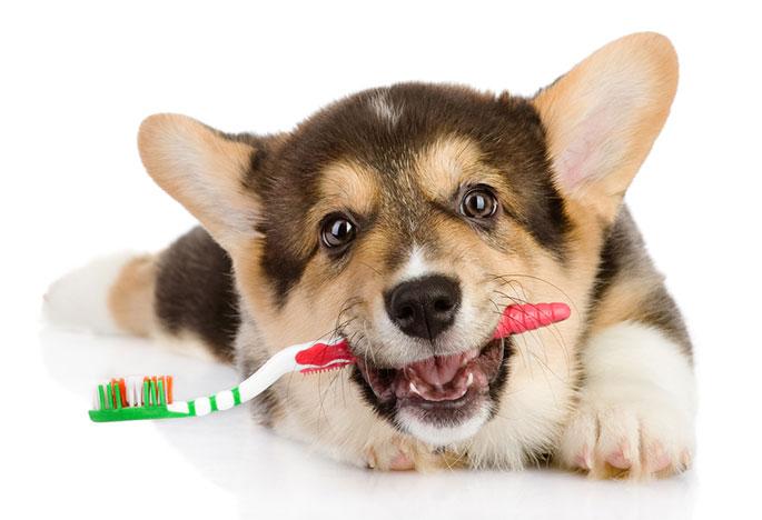 dog-dental-care