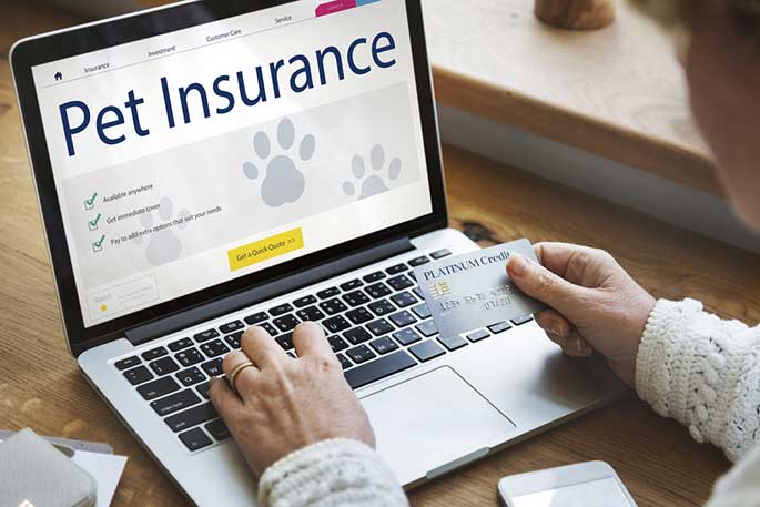 Pet Needs Medical Insurance