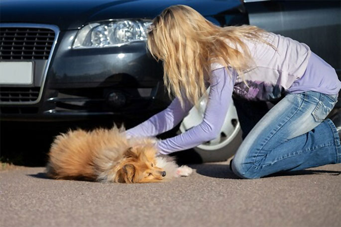 Reasons You Should Insure Your Pet