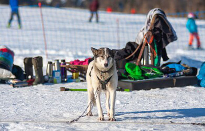 Best Dog Sports Gear
