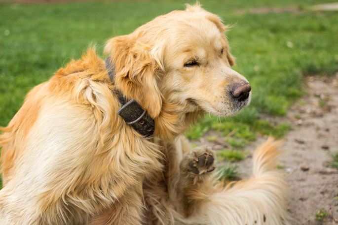 Keep Your Dog Safe From Parasites