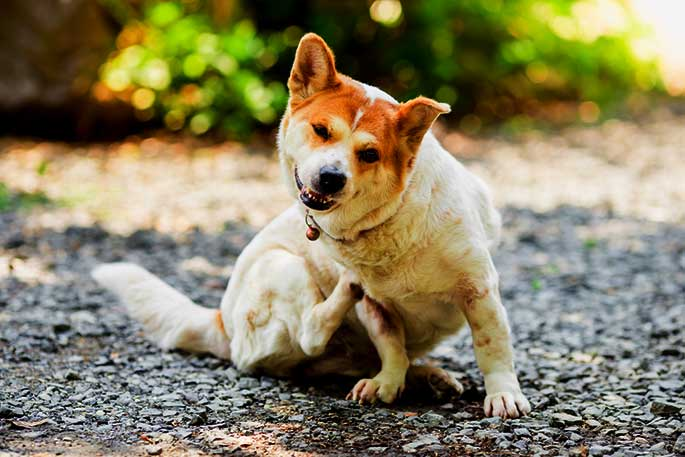 What to Do If Your Dog Has Skin Allergies