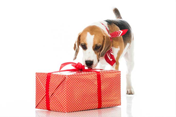 gift for pet
