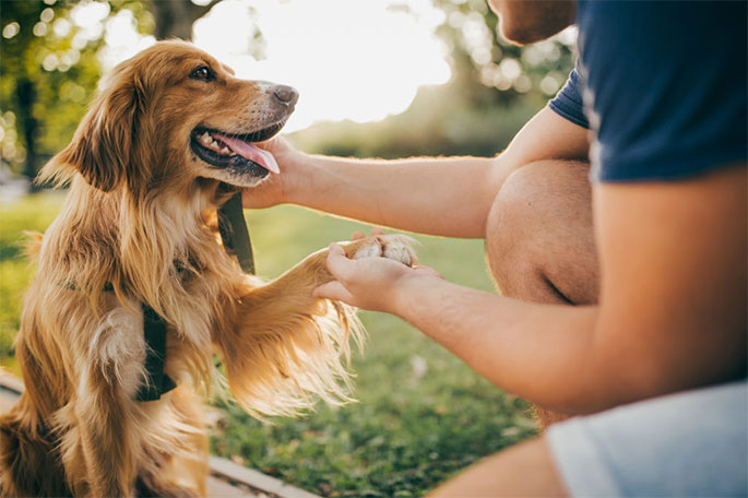Why You Should Do Routine Vet Visits for Your Dog