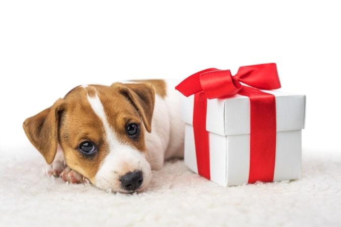 Custom Gift Ideas for The Dog Lovers