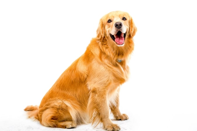 Factors to Consider When Choosing a Dog Breed