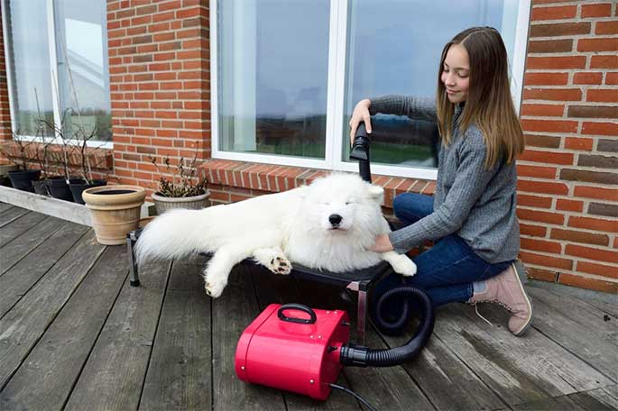 home-safety-tips-for-pet-owner