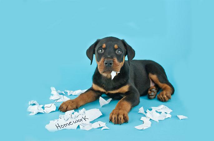 Dog Ate Your Homework