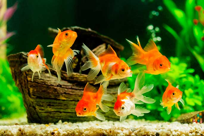 5 Top Tips for How to Take Care of a Fish for Complete Beginners