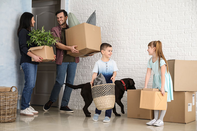 Moving With Cats and Dogs