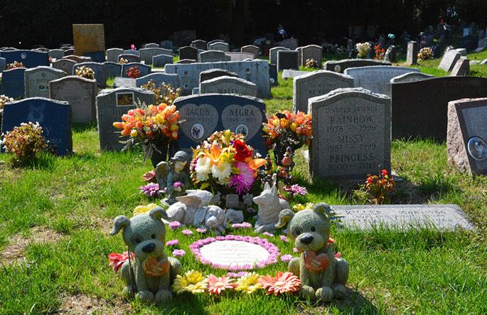 Pet Funerals