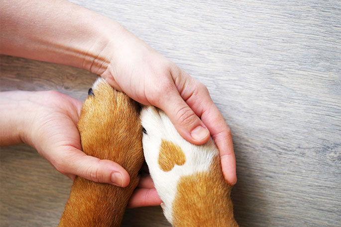Tips for Properly Caring for Your Dog's Paws & Claws