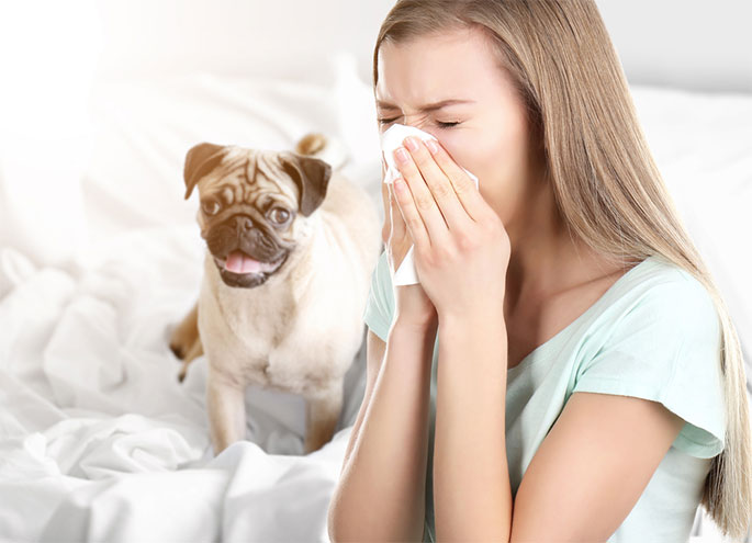 Dog Allergies: Symptoms and Cures