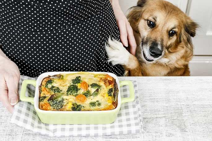 Balanced Homemade Dog Food Recipes