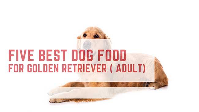 Best dog Food For Golden Retriever adult dog