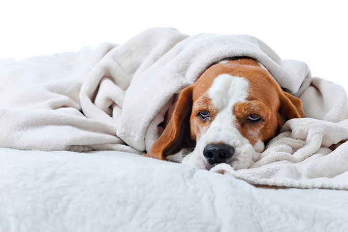 Common Diseases in Dogs