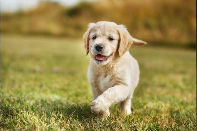 Effective Solution for Flea and Tick Treatment In Dogs