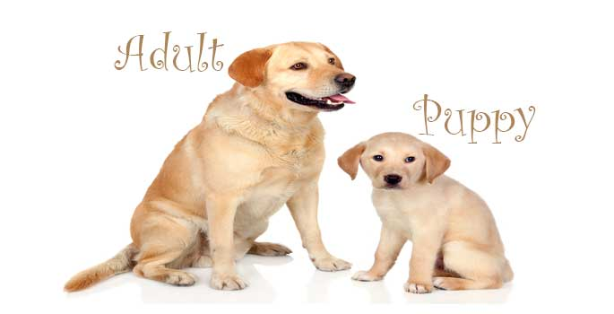 Puppy or Adult Dog