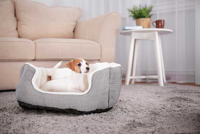 Your Dog's Bed and Wellbeing
