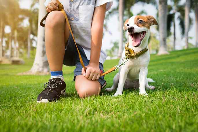 Dog Behavioral Issues And Mental Wellbeing